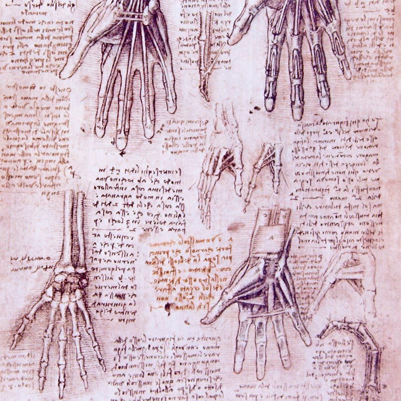 Corpus of the Anatomical Studies, Italy — 1483-1513