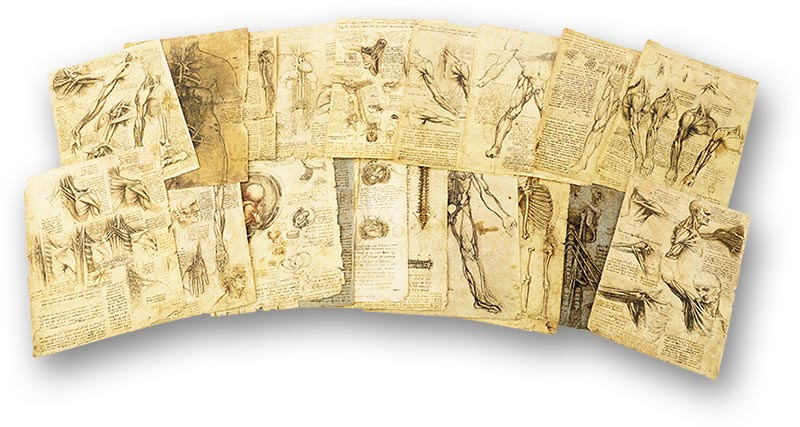 Corpus of the Anatomical Studies, Italy — 1519